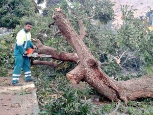 Municipality clearing debris caused by floods
